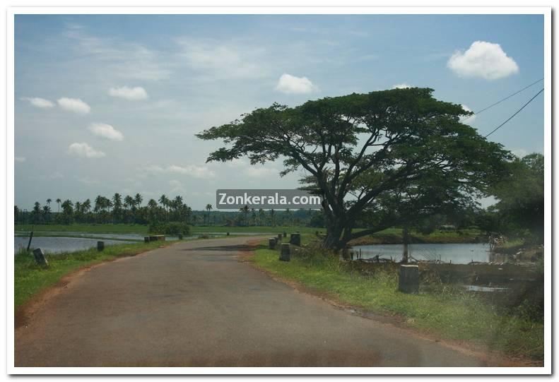 Kerala Photos : Kerala : Kottayam : Kottayam Ayamkudi Photos 8