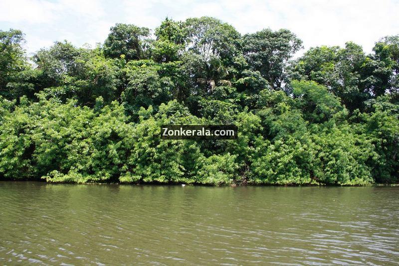 Kumarakom lake photos 12
