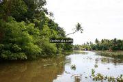 Kumarakom lake photos 2