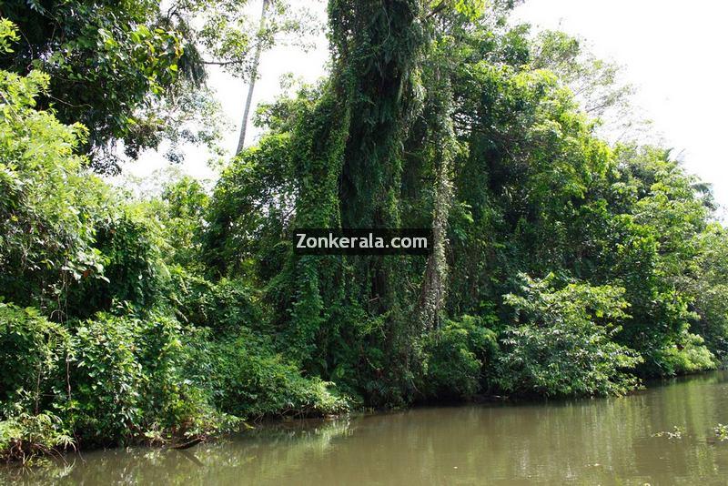 Kumarakom lake photos 4