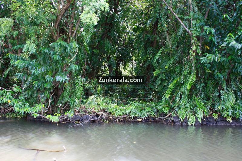 Kumarakom lake photos 8