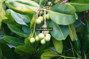 Kumarakom pictures 11