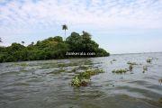 Kumarakom vembanad backwaters 1