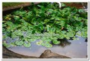 Ambal pond