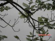 Marine drive tree 4189