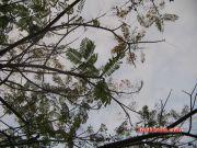 Marine drive tree 4190