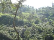 Munnar photo 08