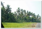 Alappuzha district nature 14