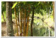 Alappuzha district nature 6