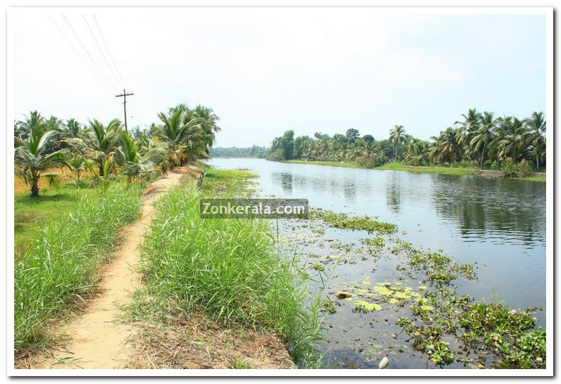 Alappuzha district nature 7