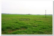 Alappuzha district nature 9