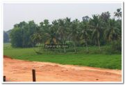 Alappuzha district nature photo 11