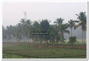 Alappuzha district nature photo 4