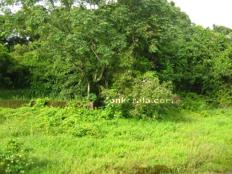 Alappuzha greenary