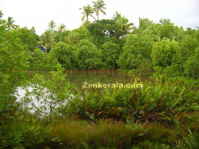 Kerala scenary 1