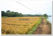 Paddy field photo 1