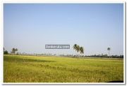 Paddy field photo 12