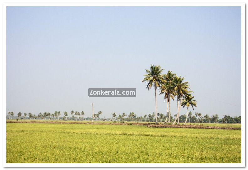 Paddy field photo 13