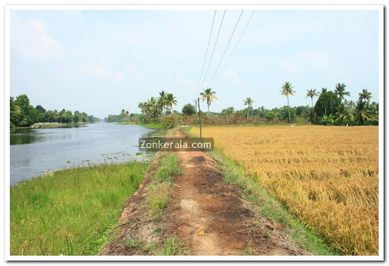 Paddy field photo 5