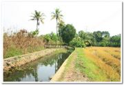 Paddy field photo 6
