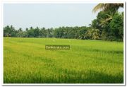Paddy field photo 7