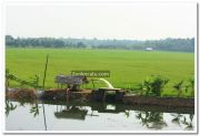 Paddy field photo 8