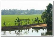 Paddy field photo 9