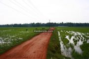 Rice fields kuttanad photo 1