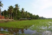 Rice fields kuttanad photo 2
