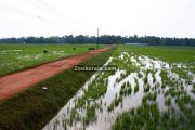 Rice fields kuttanad photo 3