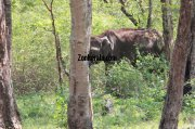 Elephant herds in wayanad wildlife sanctury 11 392