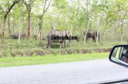 Elephant herds in wayanad wildlife sanctury 6 420