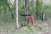 Wayanad wildlife sanctury photo 1 429