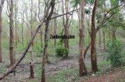Wayanad wildlife sanctury photo 3 366