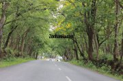 Wayanad wildlife sanctury photo 4 798