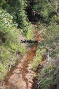 Wayanad wildlife sanctury photo 5 154