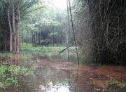 Marshy bamboo forests