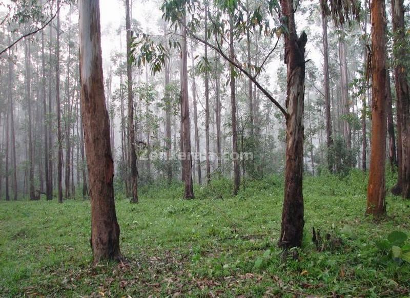 Marshy woods