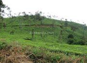 Tea estate en route meppadi