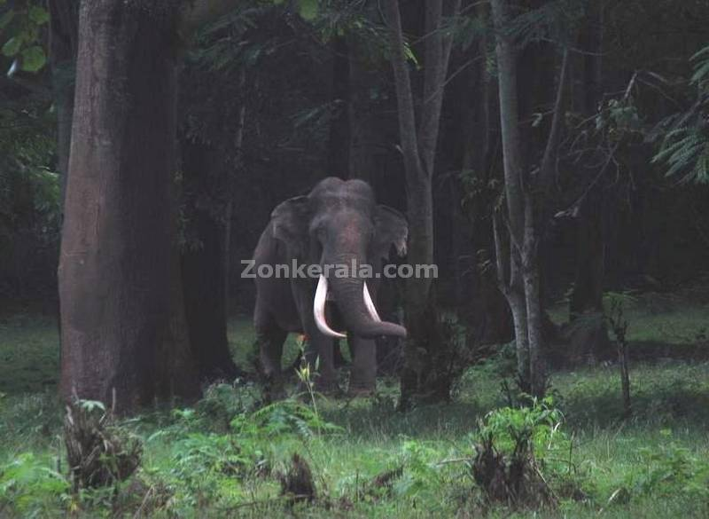 Trained tusker