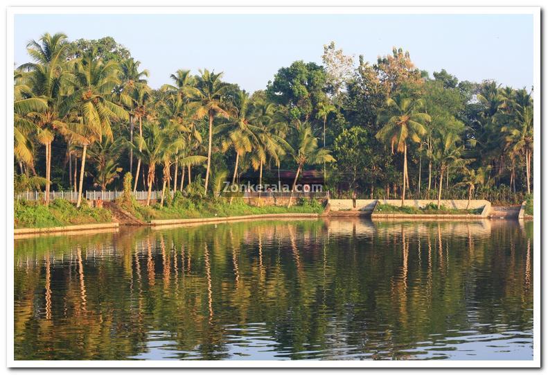 Haripad temple pond 5