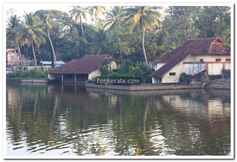 Haripad temple pond 6