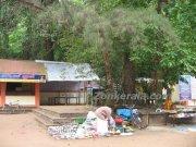 Mannarsala nagaraja temple 3