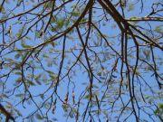 Tree 2188