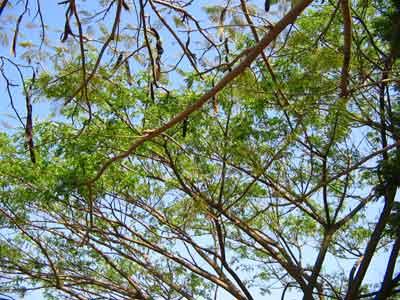 Tree 2189