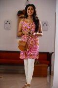 Albums Amala Paul Cinema Actress 3487