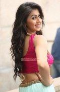 Malayalam Movie Actress Nikki Galrani Latest Pictures 8755