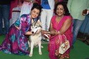 New Images Movie Actress Nikki Galrani 5891