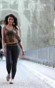 Nikki Galrani Cinema Actress New Stills 5034