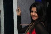 Nikki Galrani Malayalam Heroine New Pics 7545